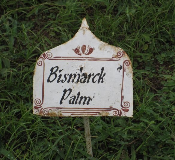 Bismarckpalme Mtoni Palast